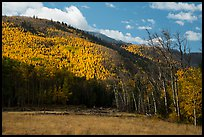 Meadow and hills in autumn foliage near Medano Pass. Great Sand Dunes National Park and Preserve ( color)