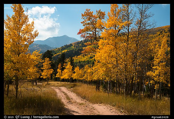 Medano primitive road surrounded by trees in autumn color. Great Sand Dunes National Park and Preserve (color)