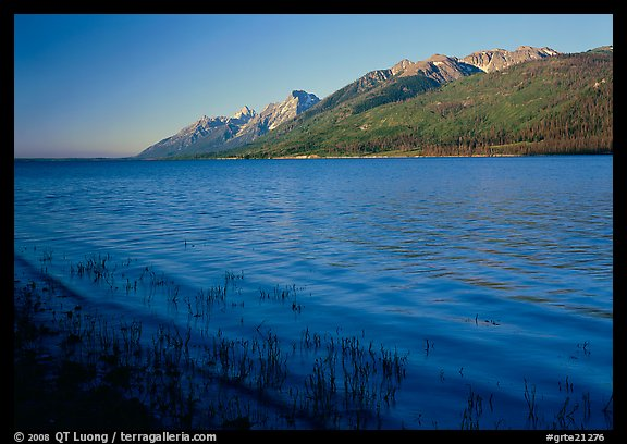 Reeds, Jackson Lake, and distant Teton Range, early morning. Grand Teton National Park (color)