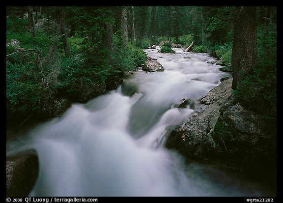Cascade Creek and dark forest. Grand Teton National Park (color)