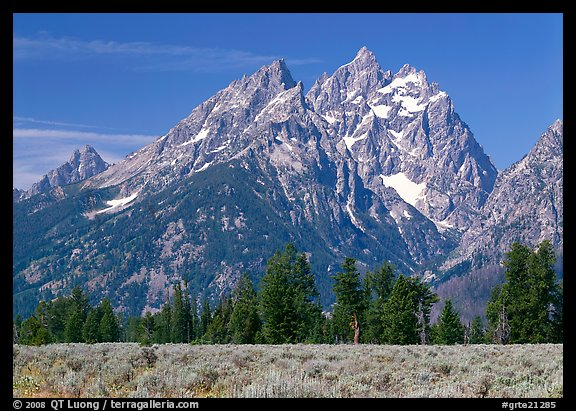 Cathedral group raising behind row of trees, morning. Grand Teton National Park (color)