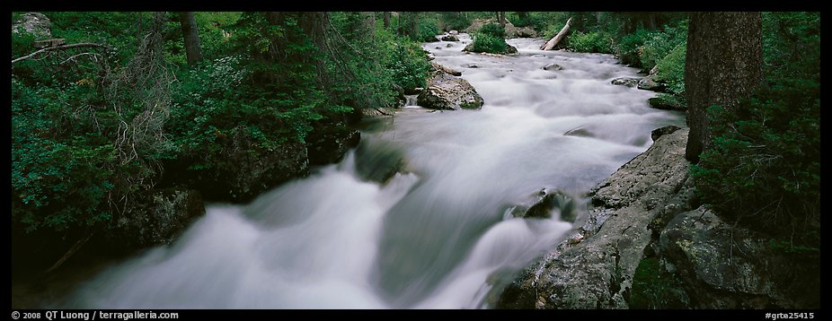Creek flowing in forest. Grand Teton National Park (color)
