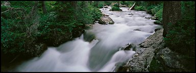 Creek flowing in forest. Grand Teton National Park (Panoramic color)
