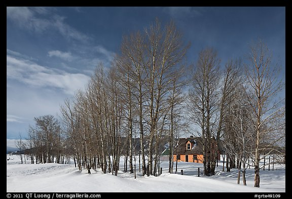 Bare cottonwoods and Moulton homestead. Grand Teton National Park (color)