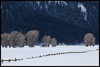 Long fence, cottonwoods, and hills in winter. Grand Teton National Park ( color)