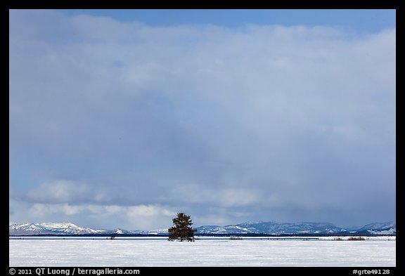 Lone tree and distant mountains in winter. Grand Teton National Park (color)