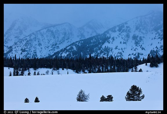 Trees, snowfield, and base of mountains at dusk. Grand Teton National Park (color)