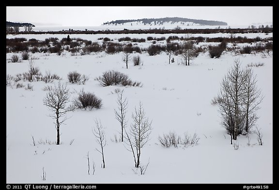 Winter landscape with bare trees and shrubs, Willow Flats. Grand Teton National Park (color)