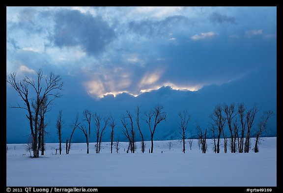 Winter sunset with snow and cottonwoods. Grand Teton National Park (color)