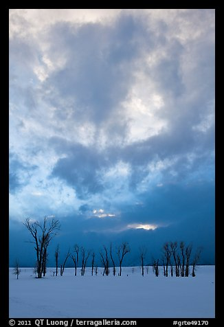 Sunset sky, stark trees in winter. Grand Teton National Park (color)