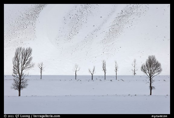 Bare trees and butte in winter. Grand Teton National Park (color)