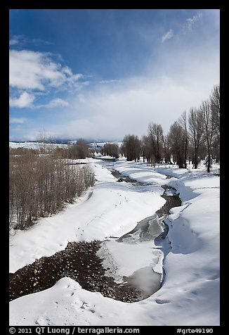 Stream and cottonwoods in winter. Grand Teton National Park (color)