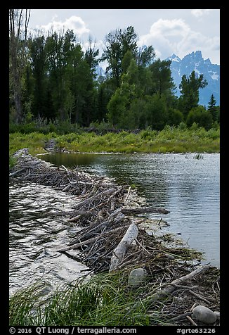 Beaver Dam near Schwabacher Landing. Grand Teton National Park (color)