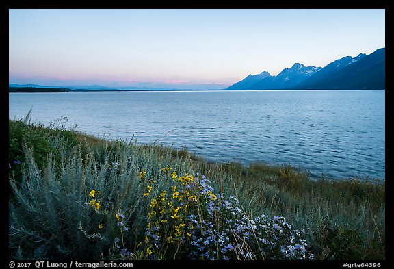 Wildflowers and Teton range from Jackson Lake, dusk. Grand Teton National Park (color)