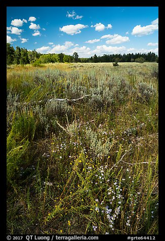 Sagebrush meadow, Laurence S. Rockefeller Preserve. Grand Teton National Park (color)