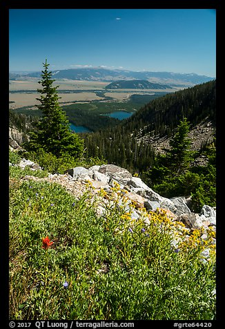 Wildflowers, view over Jackson Hole from Garnet Canyon. Grand Teton National Park (color)