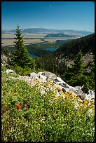 Wildflowers, view over Jackson Hole from Garnet Canyon. Grand Teton National Park ( color)