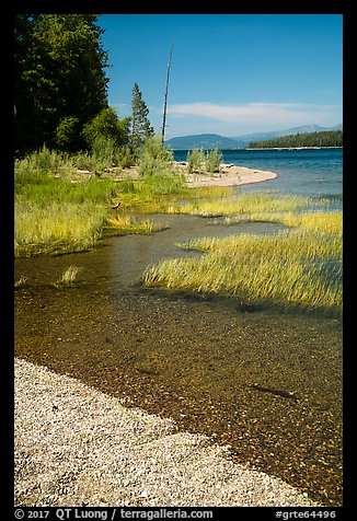 Island shoreline with grasses and clear water, Colter Bay. Grand Teton National Park (color)