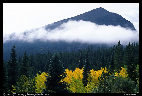 Fog, trees, and peak, Glacier basin. Rocky Mountain National Park (color)