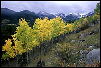 Aspens and mountain range in Glacier basin. Rocky Mountain National Park, Colorado, USA.