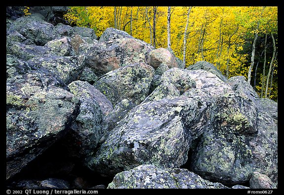 Field of large lichen-covered boulders and  aspens in fall foliage. Rocky Mountain National Park (color)