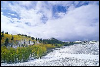 Aspens, snow, and clouds. Rocky Mountain National Park, Colorado, USA.