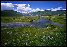 Wildflowers, meadow, and stream, Many Parks. Rocky Mountain National Park, Colorado, USA.