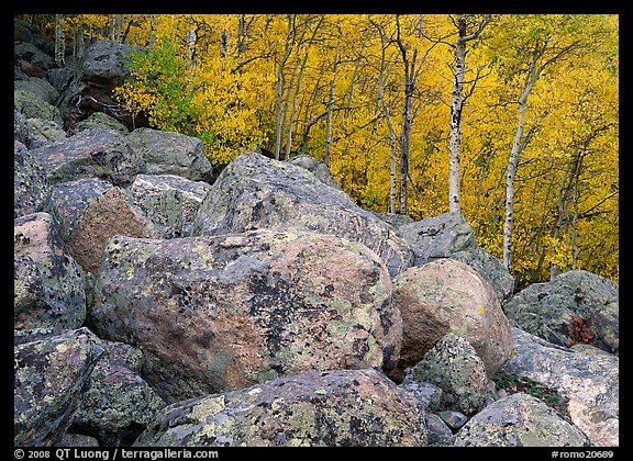 Lichen-covered boulders and yellow aspens. Rocky Mountain National Park (color)
