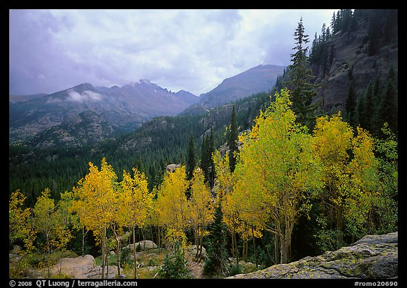 Aspens in fall foliage and Glacier basin mountains. Rocky Mountain National Park (color)