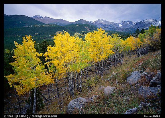 Aspens and mountain range in Glacier basin. Rocky Mountain National Park (color)
