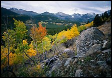 Aspens and mountain range in Glacier basin. Rocky Mountain National Park ( color)