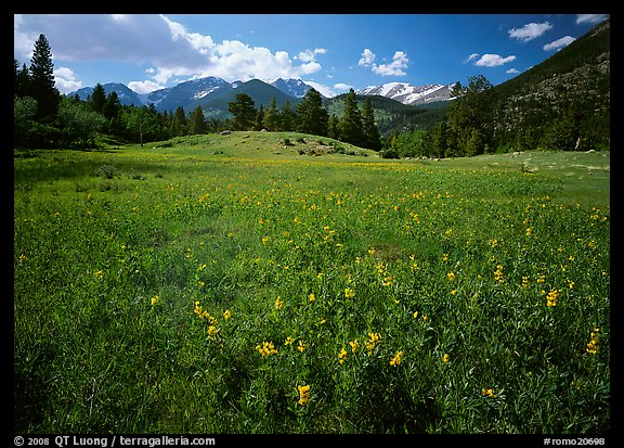 Wildflower carpet in meadow and mountain range. Rocky Mountain National Park (color)