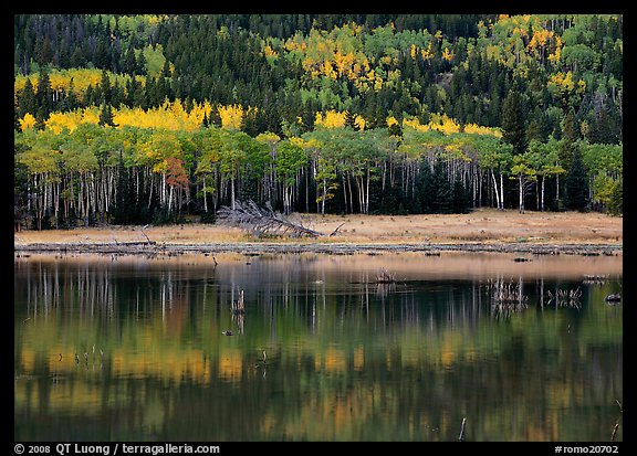 Mixed trees and  reflections. Rocky Mountain National Park (color)