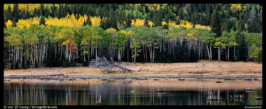 Aspens in autum foliage reflected in pond. Rocky Mountain National Park (color)