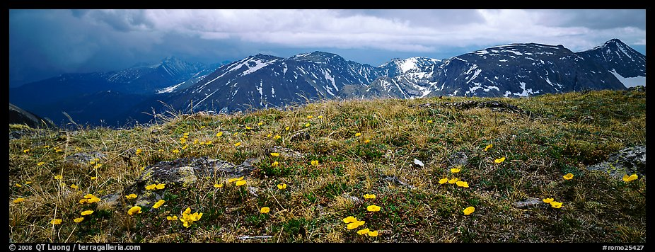 Wildflowers on high alpine meadows. Rocky Mountain National Park (color)