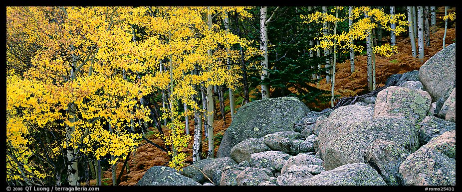 Fall scenery with yellow aspens and boulders. Rocky Mountain National Park (color)