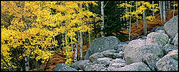 Fall scenery with yellow aspens and boulders. Rocky Mountain National Park (Panoramic color)