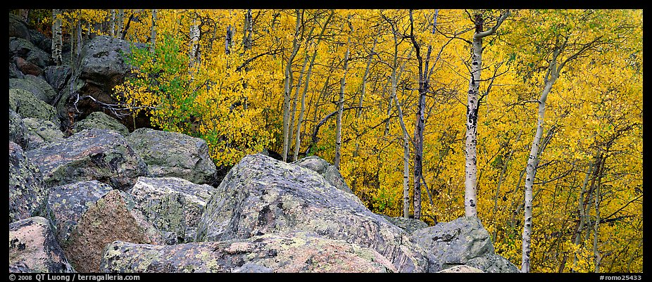 Aspens in yellow autumn foliage and boulder field. Rocky Mountain National Park (color)
