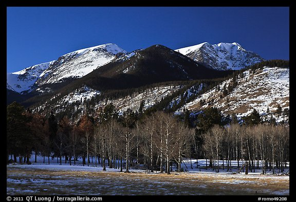 Aspens and Bighorn mountain in winter. Rocky Mountain National Park (color)