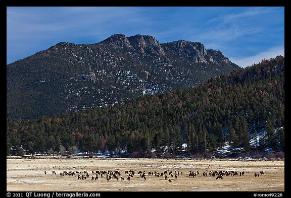 Elk Herd and  Gianttrack Mountain, late winter. Rocky Mountain National Park (color)