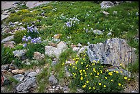 Wildflowers and boulders. Rocky Mountain National Park ( color)