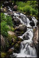 Cascading stream. Rocky Mountain National Park ( color)