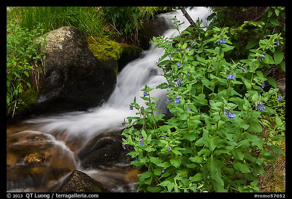 Wildflowers and cascading stream. Rocky Mountain National Park (color)
