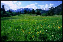 Wildflowers in meadow. Rocky Mountain National Park, Colorado, USA.