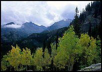 Aspens and Glacier basin mountains. Rocky Mountain National Park, Colorado, USA.