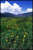 Meadow with wildflower carpet near Horseshoe Park. Rocky Mountain National Park, Colorado, USA.