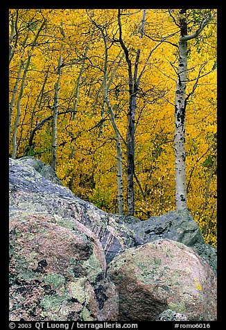 Boulder field and yellow aspens. Rocky Mountain National Park (color)