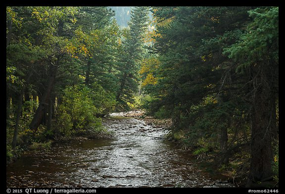 North St Vrain Creek flowing in dense forest, Wild Basin. Rocky Mountain National Park (color)