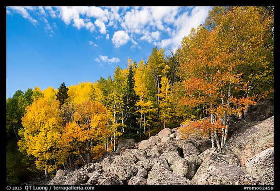 Brightly colored aspens and boulders in autumn. Rocky Mountain National Park (color)
