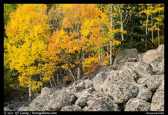 Aspens and boulders in autumn. Rocky Mountain National Park (color)
